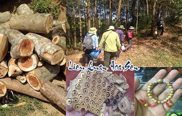 vòng gổ dâu rừng